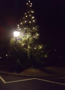 Weihnachtsbaum Bebenhausen